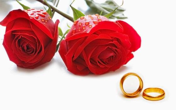 Kumpulan Bunga Mawar Merah (2)